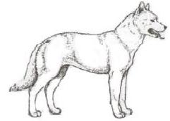Lenguaje canino posición neutra