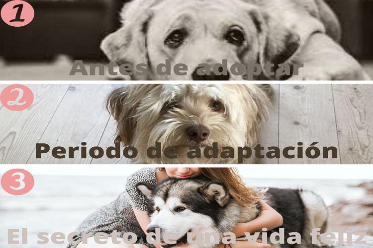 Adopción responsable