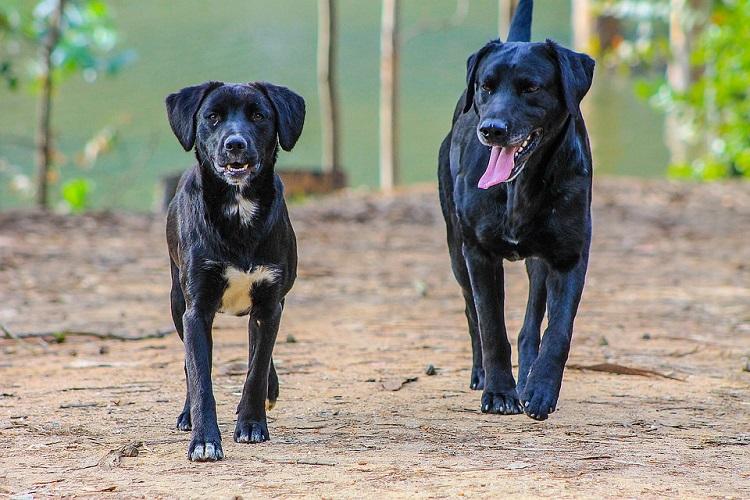 Etapas del desarrollo canino