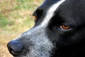 Traducción perro. Diccionario canino