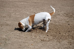 Diccionario canino
