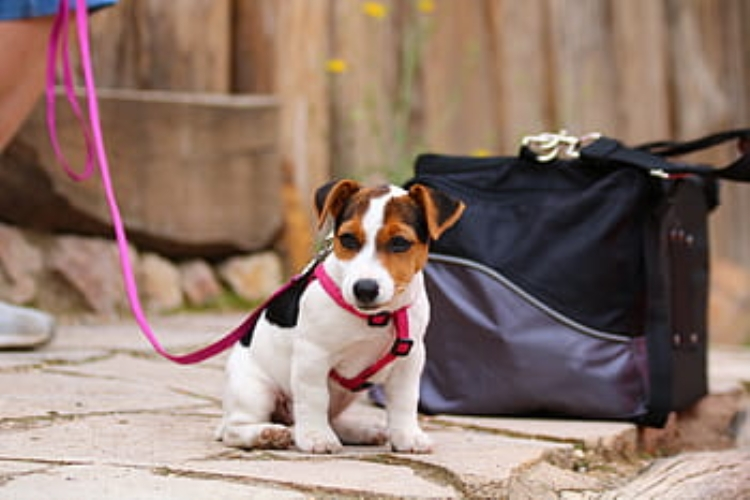 Accesorios básicos del perro