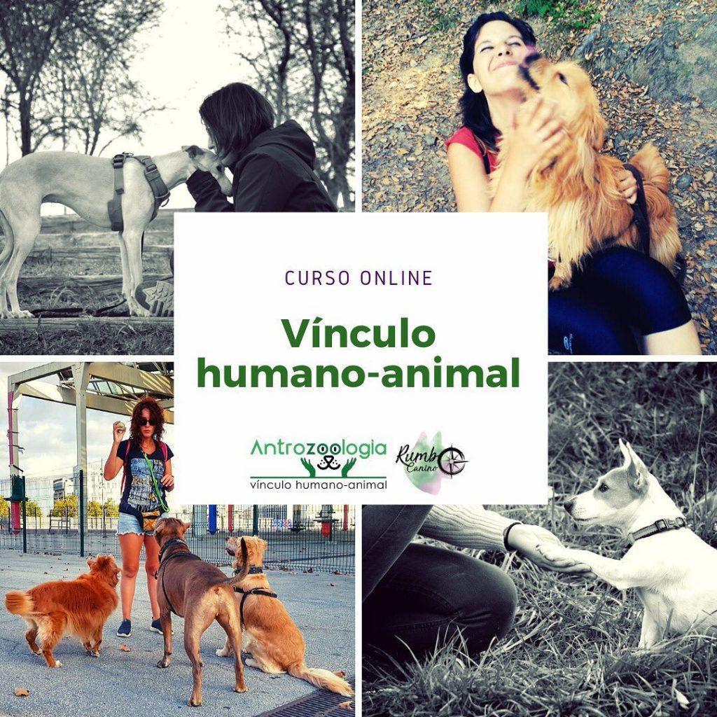 curso vínculo humano animal