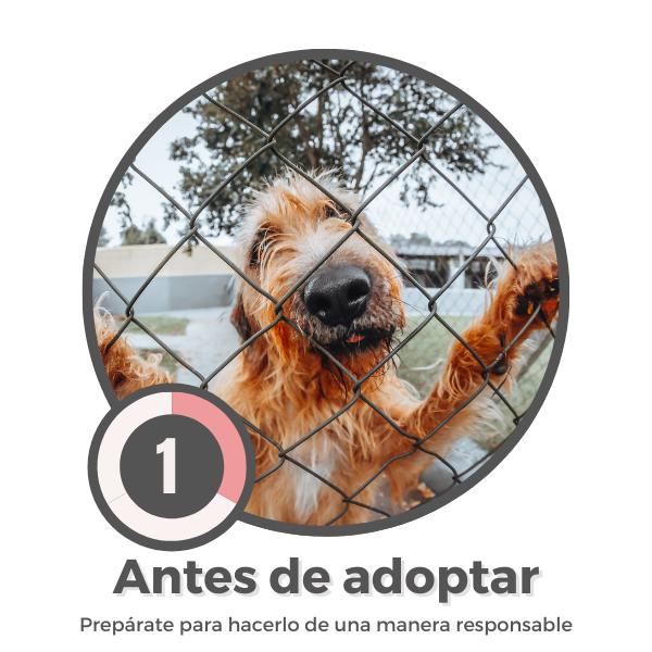 Antes-de-adoptar
