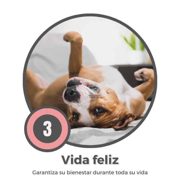 Vida feliz perro adoptado
