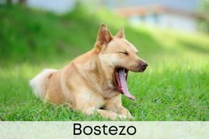 Bostezo