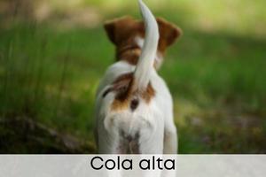 Cola alta