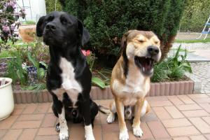 El lenguaje corporal del perro
