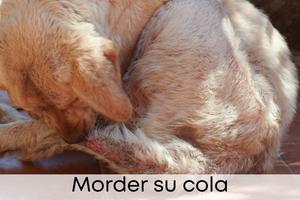 Morder su cola