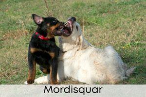 Mordisquear